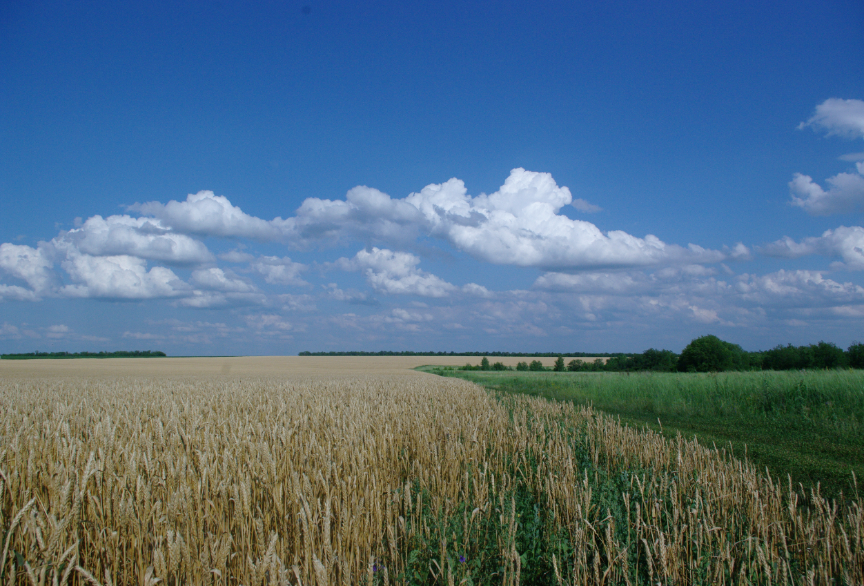 "Digital Picture/Photo/Wallpaper ""Wheat_field"" 1"