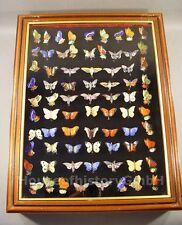 106264 Sammlung Konvolut Lot, 75 WHW Abzeichen, Schmetterlinge Falter, Porzellan