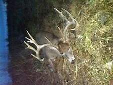 Ohio whitetail hunts