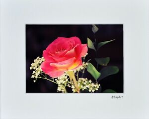 Flower Red Rose Photo Art Home House Bathroom Wall Decor Matted Print Picture Ebay