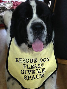 Details about CAUTION YELLOW DOG BIB GIVE ME SPACE MANY DIFFRENT SLOGANS  AVAILIBLE