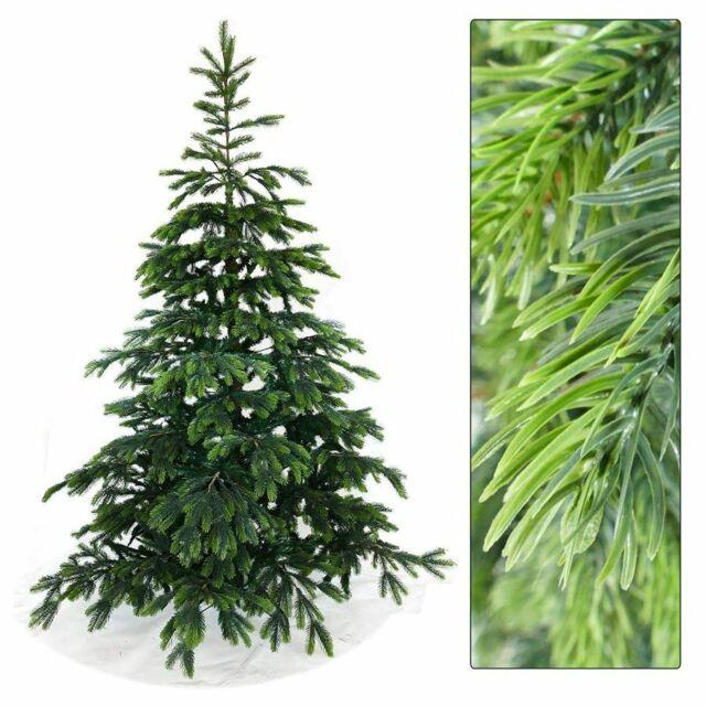 wann weihnachtsbaum kaufen