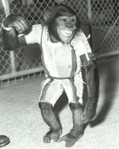 NASA Ham the Chimp 8x10 Photo