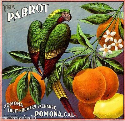 Pomona Los Angeles County The Parrot Bird Orange Citrus Fruit Crate Label Print