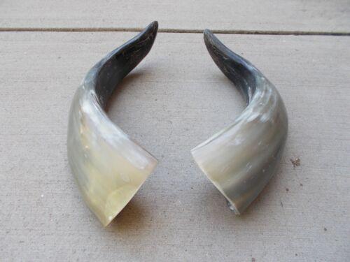 """STEER BULL skull,BLACK POWDER, ONE pair CARVING HORNS REAL COW HORN 8/"""" X 16/"""""""