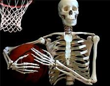 Life Size Human Anatomical Skeleton Model 180cm For Student Amp Doctor