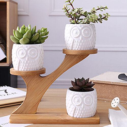 Owl Succulent Pots Ceramic Garden Planter Flower Holder Bamboo Stand Sets