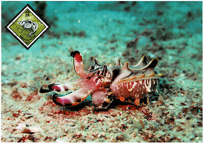 Aus Dem Ausland Importiert Tintenfisch Schmuckblatt 2.2 Entlastung Von Hitze Und Sonnenstich