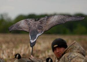 Avery-GHG-Greenhead-Gear-SUPER-Flag-Canada-Goose-Hunting-Duck-Decoys-Power