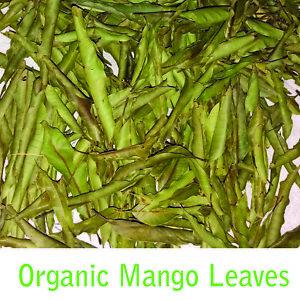 Ceylon-Organic-Fresh-Dried-Mango-leaves-for-More-Benefits