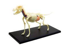puzzle 4D VISION animal anatomy No.12 dog anatomical skeleton model Japan