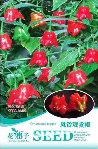 20 Seeds//Pack Campanula Shape Ornamental Pepper Seed Organic Original Pack B078