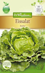 Eissalat-039-Stylist-039-Lactuca-sativa-Salat-ca-60-Samen-4173