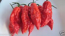 30 Bhut Jolokia, hot pepper seeds(Ghost Pepper, Naga Jolokia)