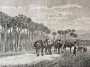 Lebanon-Beyrouth-Promenade-of-Pins-Engraving-on-Steel-1890-Gravee-per-Canedi