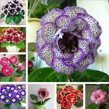 100pcs Mix rare real gloxinia seeds, beautiful bonsai sinningia gloxinia flower