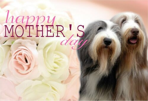 Bearded Collie Dog C5 Gloss Mothers Day Card MBEARDIE-1 paws2print