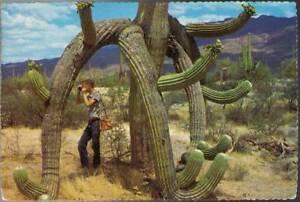 wot-Postcard-Saguaro-Cactus