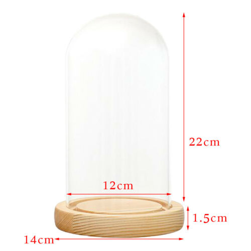 DIY Craft Glass Dome Cover Dry Flower Vase Wood Cork Cloche Oval 12x22cm