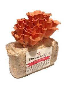 Details about Organic Pink Oyster Mushroom Farm - Beautiful Mushroom  Growing Kit - All in O
