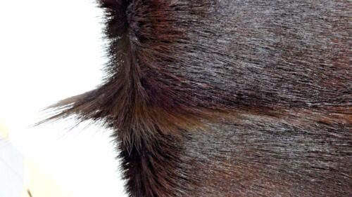 African Deer Skin Springbok Skin Solid Sandlewood Brown Dyed African Antelope