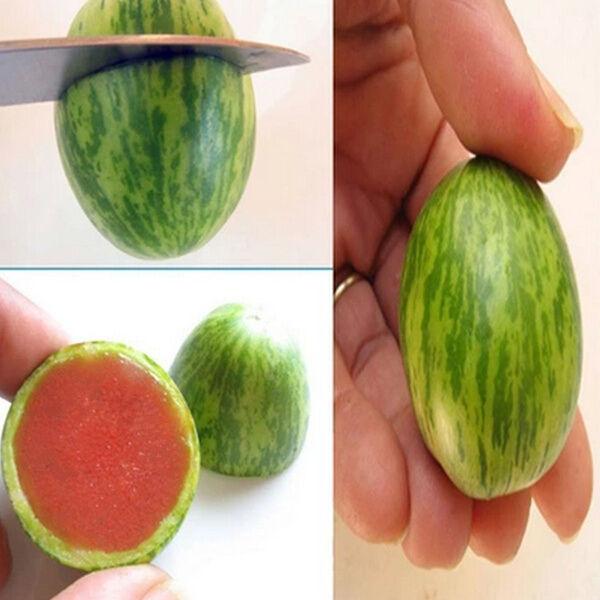 5 Samen für Mini-Wassermelonen kleinste Melonen der Welt süß und kernarm