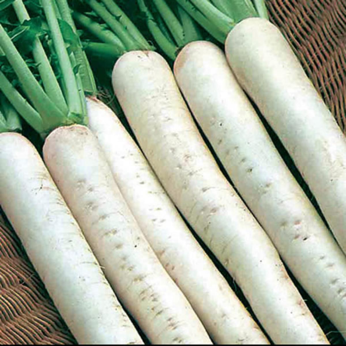 Mooli F1 - April Cross - Japanese radish seeds