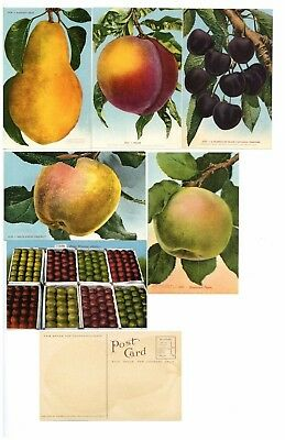 P09 Apple Cherry Fruit Pear 6 Different 1910/'s Mitchell Post Cards Peach