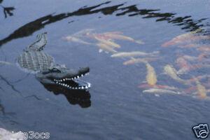 Floating Alligator Gator Swimming Pool Toy Spa Hot Tub