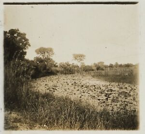 Afrique-noir-Photographie-BC20-Plaque-stereo-Vintage-ca-1920