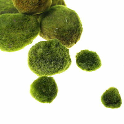 Giant Marimo Moss Balls x2 +1 FREE 2.5~3.5cm Live aquarium tank plants low light