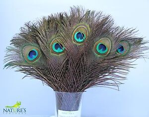25pcs-Real-Natural-Peacock-Feathers-about-10-12-Inches