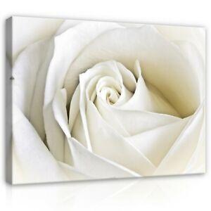 CANVAS-Wandbild-Bilder-Leinwandbild-Natur-Blumen-Blume-Rose-Wiess-Rosen-XXL-3D