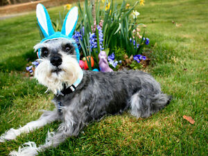 Dog Bunny Hat Cat Costume