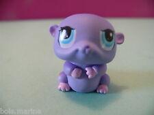 petshop cochon d inde hamster violet / purple guinea pig N° 1349