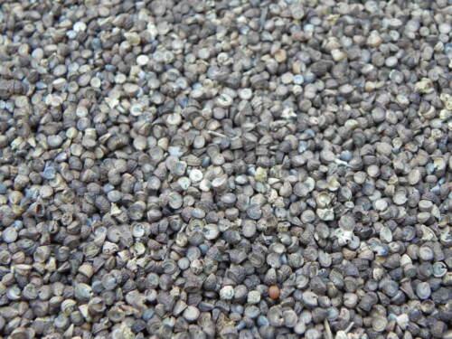MALVE 500 g Saatgut Kulturmalve Heilpflanze Wildacker Bienenweide UNKRAUTKILLER