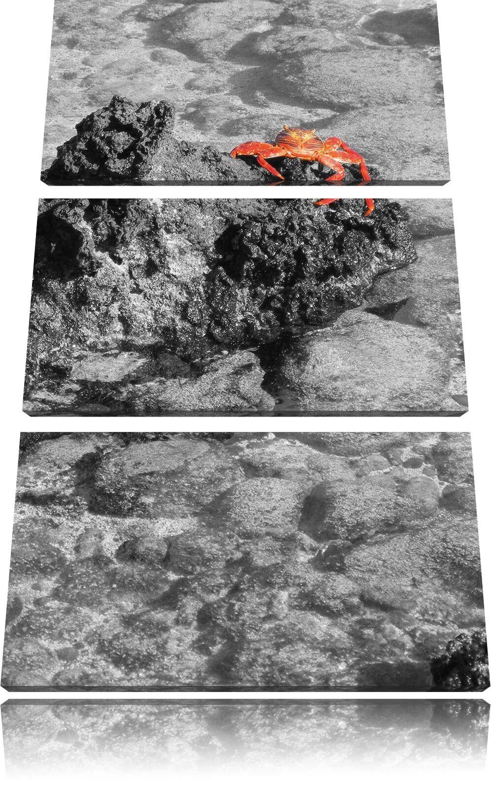 Rojas Arrecife Cangrejo en Arrecife Rojas Negro Blanco 3-Teiler Foto Lienzo Decoración de Pa rojo  c389e5