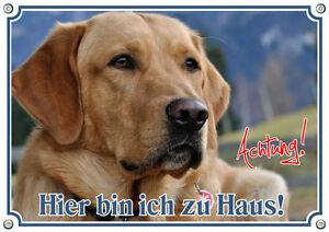 Dog Shield Golden Retriever - Enseigne en métal pour panneau d'avertissement