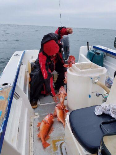 30-1//0 Squid SABIKI bait Bottom Sand dab Fishing Mackerel Bonito W// Organizer