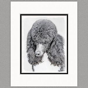 Standard Poodle Dog Original Art Print 8x10 Matted to 11x14