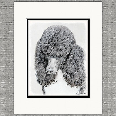 Standard Poodle Parti Black and White Original Art Print 8x10 Matted to  11x14 | eBay