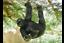 Hanging-Gorilla-Garden-ornament-Gorilla-hanging-tree-statue thumbnail 1