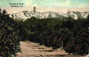 Oranges and Snow Pasadena Orchard California CA Vintage 1910's 1916 Postcard