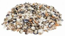 NaDeco® Muschelmix small 1kg | Bastelmuscheln | kleine Dekomuscheln | kleine Mus