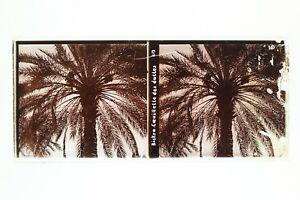Algeria-Biskra-Date-Foto-n46L7-6-Placca-Lente-Stereo-Vintage