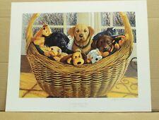 A Basketful of Fun by Stephen P Hamrick Yellow, Chocolate, Black Lab Beenie Baby