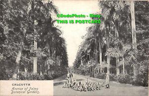 R386722 Calcutta. Avenue of Palms. Botanical Gardens. Post Card