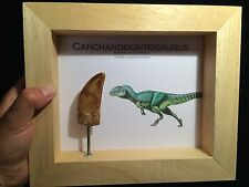 Cadre Dent tournante Carcharodontosaurus 72 mm / fossil tooth frame! EXCLU IFC!