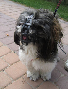 Image Is Loading Muzzle Shih Tzu And Other Breeds