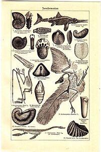 1887-PREHISTORIC-JURASSIC-DONOSAURS-SKELETONS-Antique-Engraving-Print